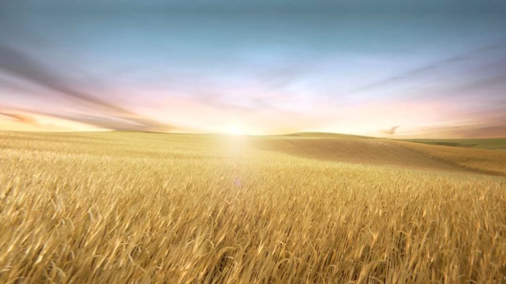 "Wide CG rendering of the Deutz ""Weizenfeld"" at sunset."